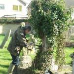 2. Still working hard on the ivy